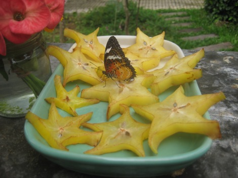 Butterfly Farm and Insect Zoo, Mae Sa